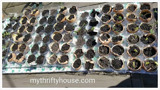 whole30 day 17 garden